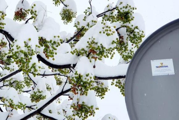 Filomena nos deja una bonita Guadalajara nevada